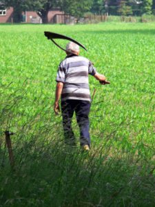 Why am I mowing with a scythe?